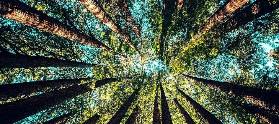 AUSTRALIA PLANT 1 BILLION TREES.jpg