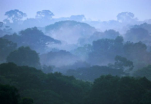 AMAZON RAIN FOREST - BING - PRISTINE PLA