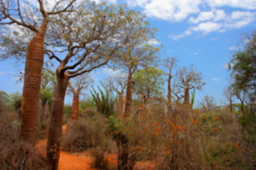 Spiny_Forest_Ifaty_Madagascar.jpg