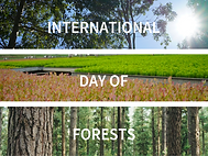 INTERNATIONAL DAY OF FORESTS 2021 4a.png