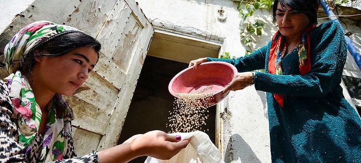 UN Women farmers harvest grains in Gisar