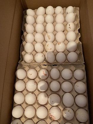 Яйца 1С - 10 шт