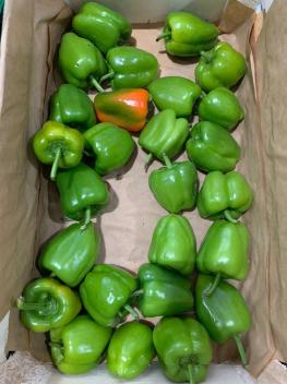 Перец Зелёный - 1 кг