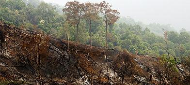 tfci-forest-bare-hillside-1_2.jpg