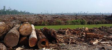 tfci-forests-field-logs-river.jpg