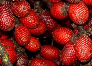 amazonianfood.jpg