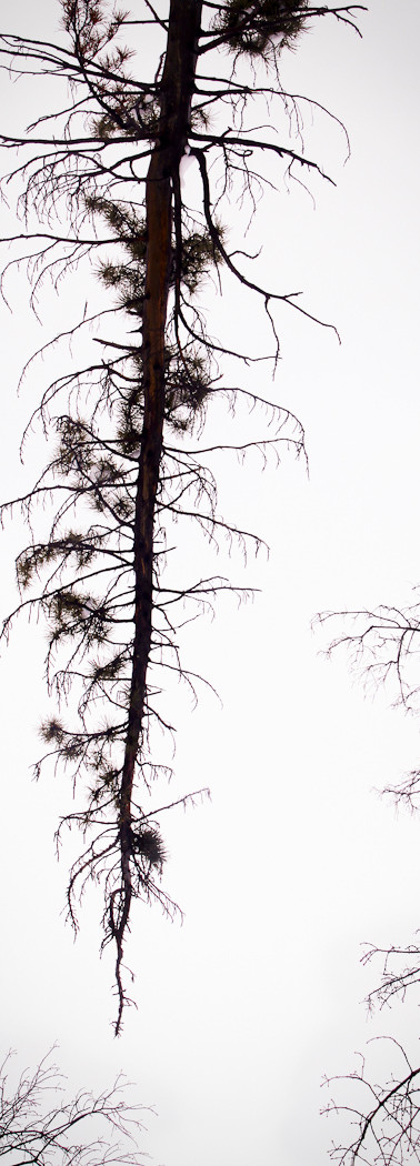Untitled (Winter Tree)