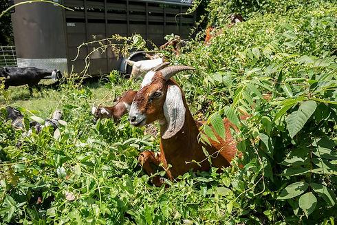 Eco-Friendly Herbicide