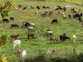 Regenerative Land Management 101