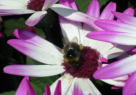 Bee-on-Flower1.jpg