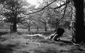 Tree Woman at Richmond.jpg