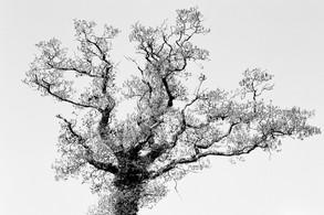 White sky black tree.JPG