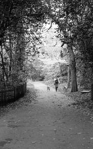 Walkin in the trees.jpg