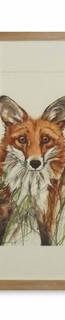 fox in grass (Anne Gilbert).jpg