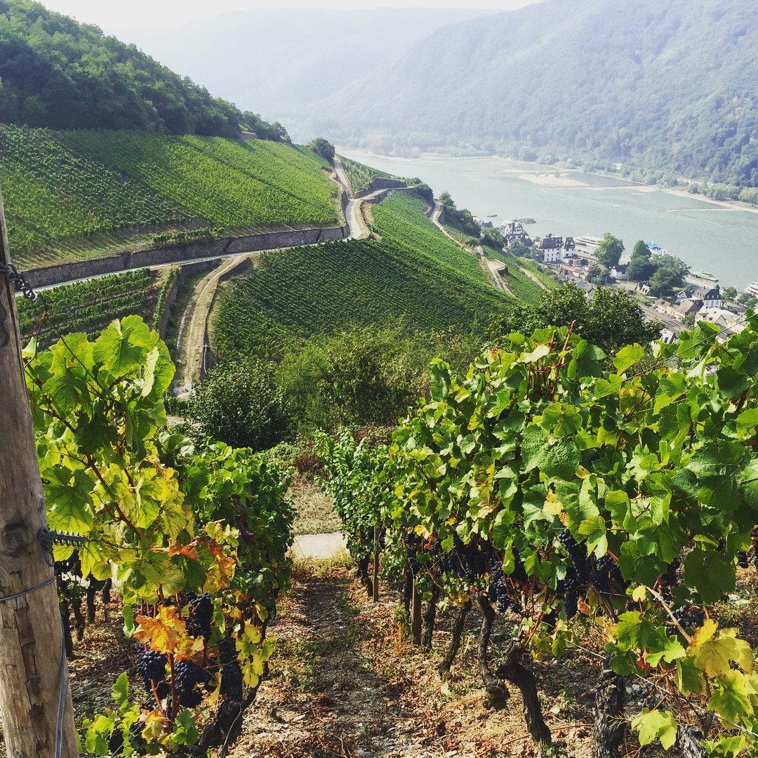 Full Day Grape Escape Rhine Valley