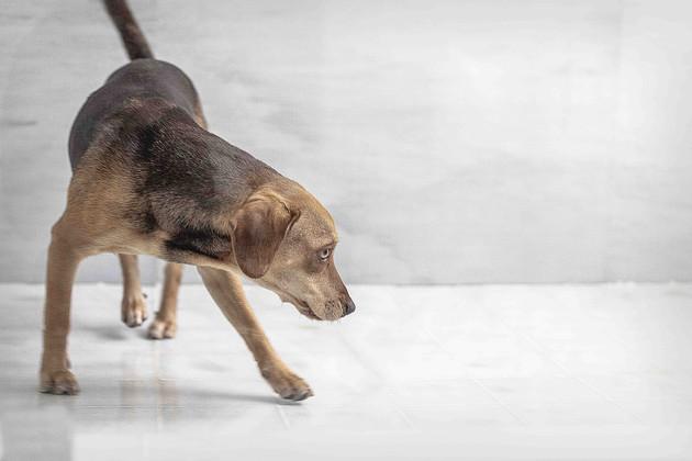 Alex Vainstein Photography--13.jpg