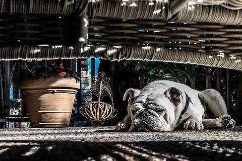 Alex Vainstein Photography-02455.jpg