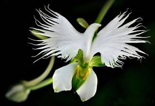 Des fleurs insolites qui ressemblent à autre chose qu'à des fleurs.