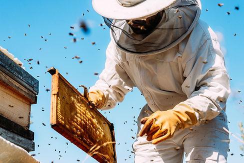Bee Keep.jpg
