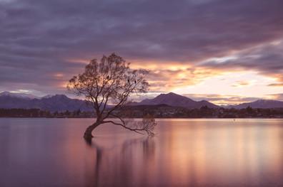 Sunrise at that Wanaka Tree
