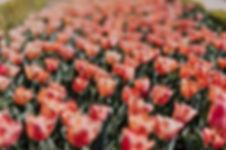 Плохое зрение - размытое изображение цветов