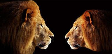 lion-3057316_1920.jpg