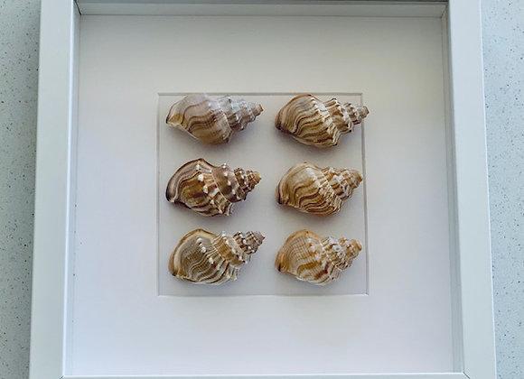 Study of Shells Artwork