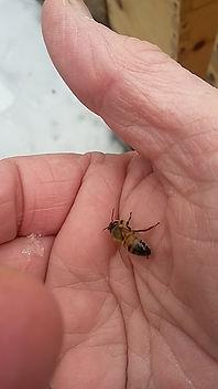 cover-photo-sticky-bees-urban-honey.jpg