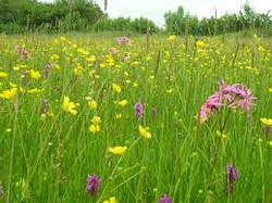 meadows 3