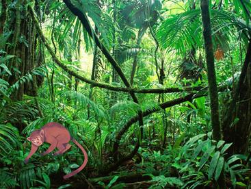 Jungle Learning