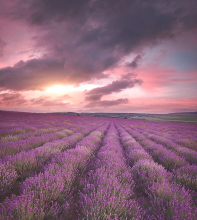 Meadow%20of%20lavender.%20Nature%20composition._edited.jpg
