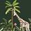tableau, affiche, poster, monkey, singe, palmer, palmier, girafe