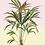 tableau, affiche, poster, parrot, perroquet, vegetation