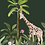 tableau, affiche, poster, savane, palmier, palmer, girafe, mokey, jungle, vegetation, singe, perroquet