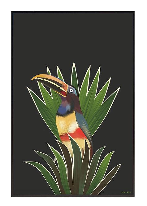 tableau, affiche, poster, toucan, palmer, palmier