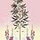 tableau, affiche, poster, chinoiserie, crownedparadise, crane rouge, vegetation, pink, flower, fleur