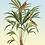 tableau, affiche, poster, parrot, palmier, palmer, perroquet