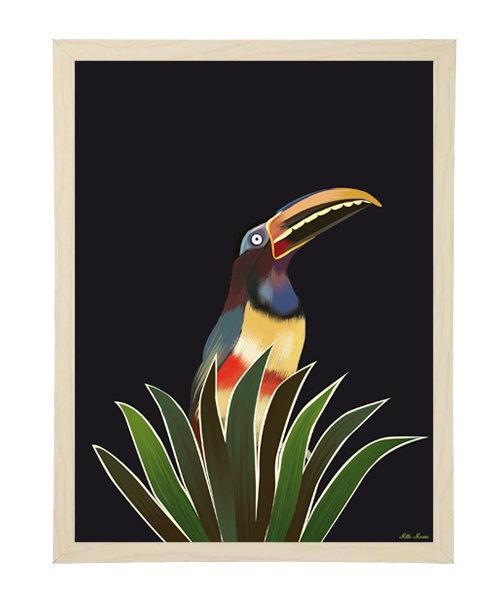 tableau, affiche, poster, toucan, vegetation, jungle