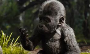 ivan_gorilla_movie_trailer.jpg