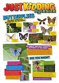 Butterflies-1.png