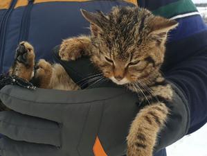 Not A Lost Kitten!