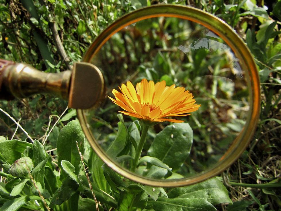 magnifying-glass-3714540.jpg
