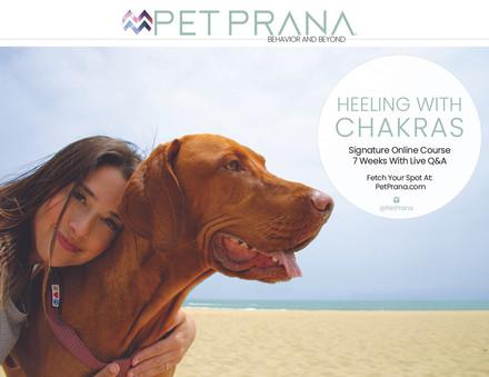 Pet Prana Postcards3.jpg