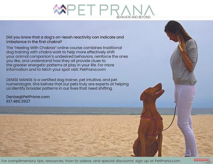 Pet Prana Postcards4.jpg