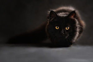 cat-694730_640.jpg