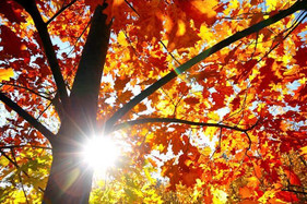 How to Embrace the Changing Seasons of our Lives...