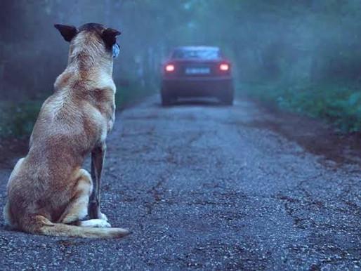 Abandonar animais é crime. Cresce o número de cães soltos nas ruas
