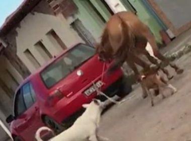 Poções: Comerciante que arrastou égua puxada por carro é denunciado pelo MP-BA