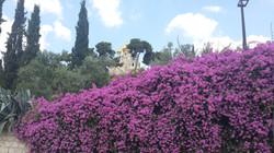 Весна в Гефсиманском Саду