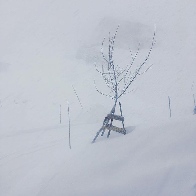 ___ Es schneit was es kann. ___